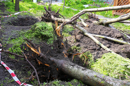 Storm Amp Disaster Cleanup Gallery Southeast Land Clearing