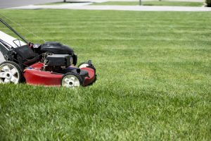mowing a healthy lawn
