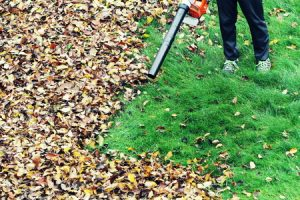 Cleaning up leaves with a leaf blower