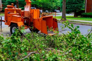 Land Clearing property